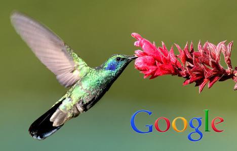 L'Hummingbird Update è il nuovo aggiornamento dell'algoritmo